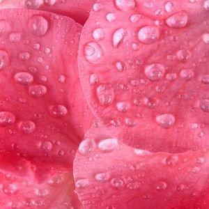 Virágvizek